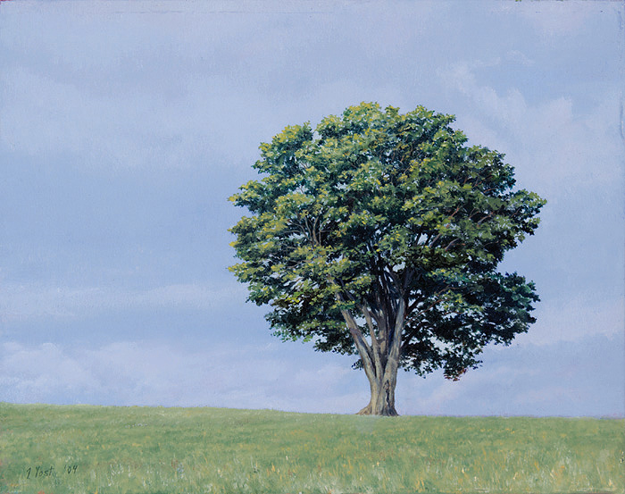 Tree on Greenleaf Hill - Tom Yost